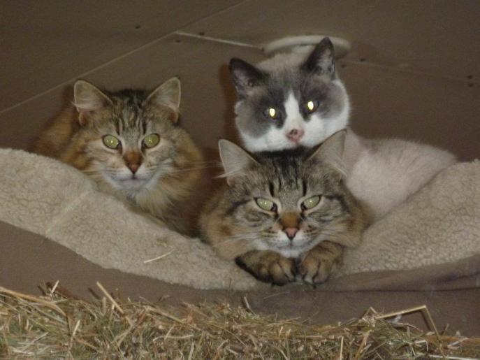 georgia3cats2012
