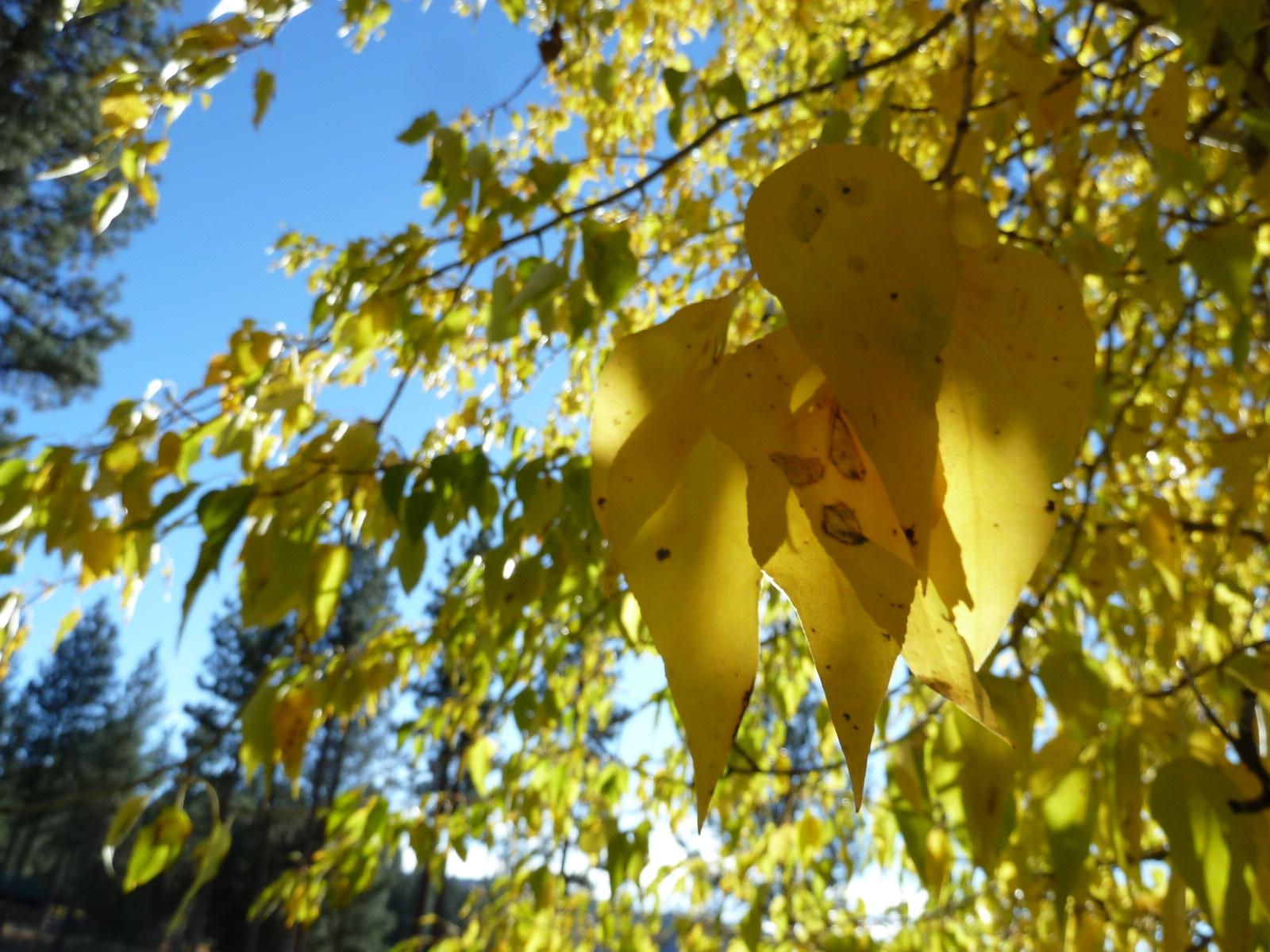 fall in MT